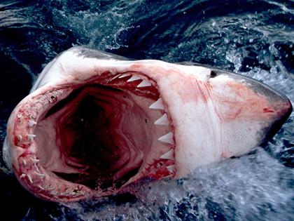 sharksodomie.jpg
